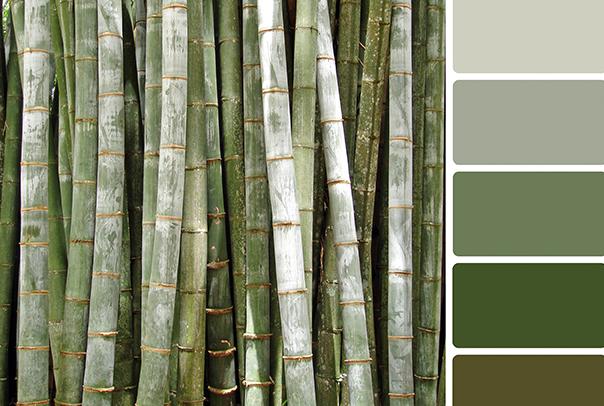 office-colour-ideas_green-bamboo